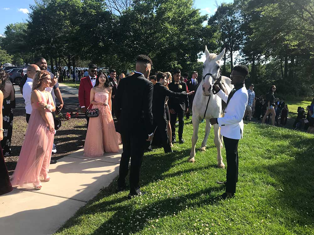 Prom group photo with horse